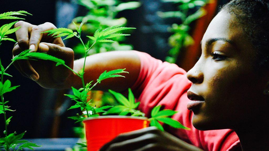 women cannabis business