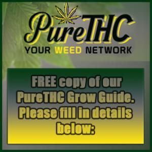cannabis grow guide